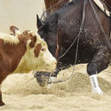 Southern 7 Cutting Horse Association Championships 6th - 8th September 2019