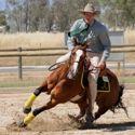 Stockhorse