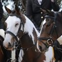 Tocumwal Opening Hunt 14th May 2011