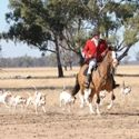 Tocumwal Opening Hunt May 2009