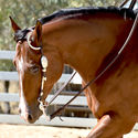 Big Valley Quarter Horse Show 18th & 19th March 2017