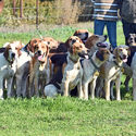 Murray Valley Open Hunt 13th May 2017