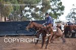 Image #DSC-3640--Trevor-Preston-on-Reys-Little-Leo--<br />(This is a low resolution version of the original photo - Contact www.photosbysallyh.com.au to Purchase)