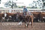 Image #DSC-3645--Lila-Sharrock-on-Short-and-Curley--<br />(This is a low resolution version of the original photo - Contact www.photosbysallyh.com.au to Purchase)