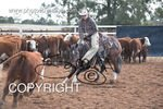 Image #DSC-3769--A.--<br />(This is a low resolution version of the original photo - Contact www.photosbysallyh.com.au to Purchase)
