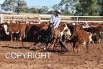 Image #DSC-3969--Martin--<br />(This is a low resolution version of the original photo - Contact www.photosbysallyh.com.au to Purchase)