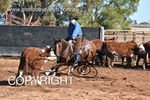 Image #DSC-4039--Angus-McKinnon-on-Broomfield-Stylish-Acre--<br />(This is a low resolution version of the original photo - Contact www.photosbysallyh.com.au to Purchase)