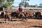 Image #DSC-4131--Lindsay-Dickens-on-Spin-N-Chisum--<br />(This is a low resolution version of the original photo - Contact www.photosbysallyh.com.au to Purchase)