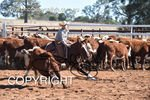 Image #DSC-4146--Lila-Sharrock-on-Short-and-Curley--<br />(This is a low resolution version of the original photo - Contact www.photosbysallyh.com.au to Purchase)