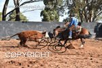 Image #DSC-4304--Angus-McKinnon-on-Broomfield-Stylish-Acre--<br />(This is a low resolution version of the original photo - Contact www.photosbysallyh.com.au to Purchase)