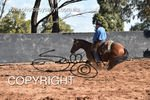 Image #DSC-4314--Angus--<br />(This is a low resolution version of the original photo - Contact www.photosbysallyh.com.au to Purchase)