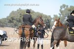 Image #DSC-6447<br />(This is a low resolution version of the original photo - Contact www.photosbysallyh.com.au to Purchase)