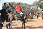 Image #DSC-7695<br />(This is a low resolution version of the original photo - Contact www.photosbysallyh.com.au to Purchase)