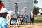 Image #DSC-7701<br />(This is a low resolution version of the original photo - Contact www.photosbysallyh.com.au to Purchase)
