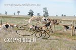 Image #DSC-7724<br />(This is a low resolution version of the original photo - Contact www.photosbysallyh.com.au to Purchase)