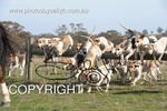 Image #DSC-7867<br />(This is a low resolution version of the original photo - Contact www.photosbysallyh.com.au to Purchase)