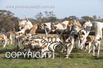 Image #DSC-7868<br />(This is a low resolution version of the original photo - Contact www.photosbysallyh.com.au to Purchase)