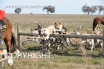 Image #DSC-7907<br />(This is a low resolution version of the original photo - Contact www.photosbysallyh.com.au to Purchase)