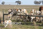 Image #DSC-7909<br />(This is a low resolution version of the original photo - Contact www.photosbysallyh.com.au to Purchase)