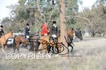 Image #DSC-7995<br />(This is a low resolution version of the original photo - Contact www.photosbysallyh.com.au to Purchase)