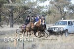 Image #DSC-8000<br />(This is a low resolution version of the original photo - Contact www.photosbysallyh.com.au to Purchase)