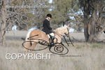 Image #DSC-8002<br />(This is a low resolution version of the original photo - Contact www.photosbysallyh.com.au to Purchase)