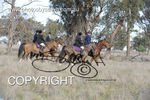 Image #DSC-8004<br />(This is a low resolution version of the original photo - Contact www.photosbysallyh.com.au to Purchase)