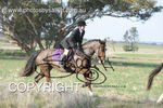 Image #DSC-8028<br />(This is a low resolution version of the original photo - Contact www.photosbysallyh.com.au to Purchase)