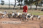Image #DSC-8039<br />(This is a low resolution version of the original photo - Contact www.photosbysallyh.com.au to Purchase)