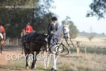 Image #DSC-8041<br />(This is a low resolution version of the original photo - Contact www.photosbysallyh.com.au to Purchase)